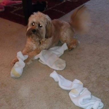 Sock Theif