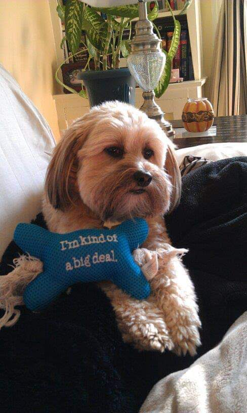 Dogs are Familytoo