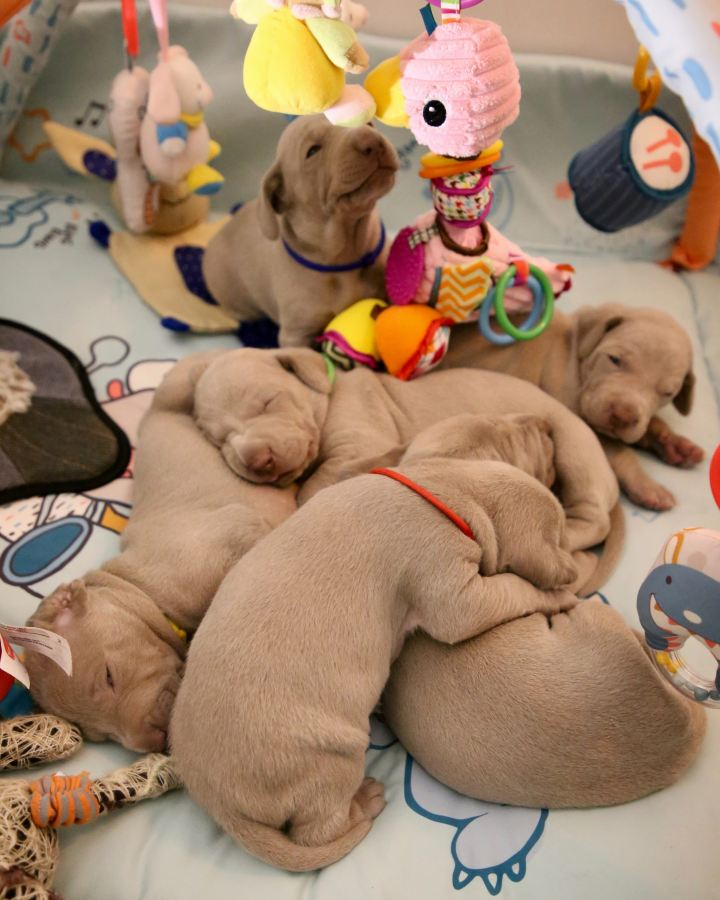 The Puppy Circus